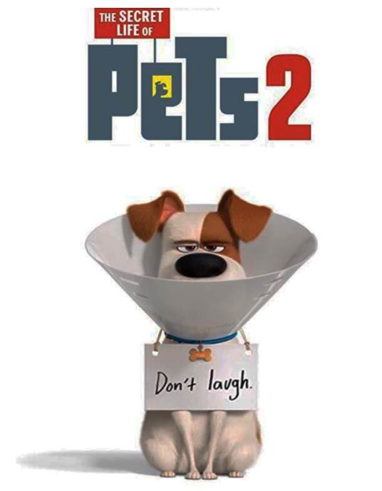 Following the huge success of the original 2016 hit the sequel continues to follow the story of what our pets do when we are not around. Max faces some major changes after his owner Katie gets married and now has a child.