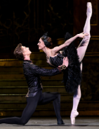 Liam Scarlett's glorious production of Swan Lake, new in 2018, returns for its first revival. While remaining faithful to the Marius Petipa/Lev Ivanov text, Scarlett's additional choreography and John Macfarlane's magnificent designs breathe new life into what is arguably the best-known and most-loved classical ballet. The entire Company shines in this eternal tale of doomed love, a masterpiece refreshed for a new generation. Tchaikovsky's first score for ballet soars with its symphonic sweep and combines perfectly with exquisite choreography from the grand pas de deux of Prince Siegfried and Odile to the swans at the lakeside. An intoxicating mix of spectacle and intimate passion, the overall effect is irresistible.